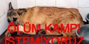 Sarıyer'de ve Türkiye'de Tecride HAYIR! Hayvanlar, oy malzemesi değildir!