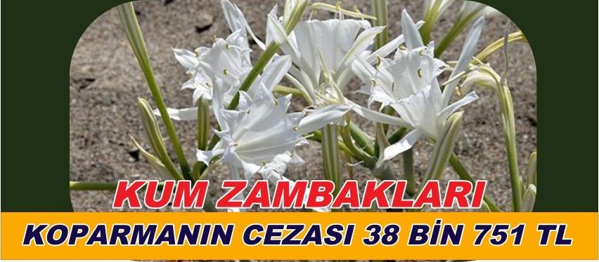 LİKYA KUM ZAMBAKLARINI KOPARMA CEZASI 38.751. TL.
