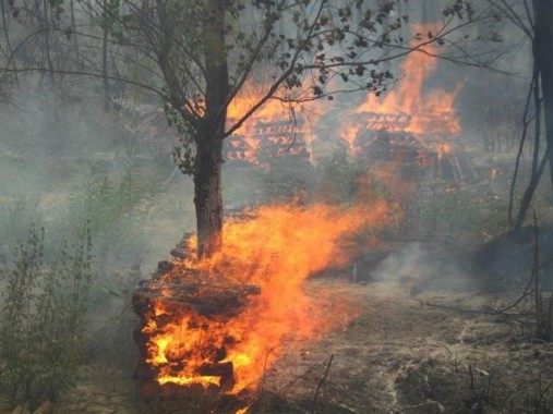 Sarıyer de orman yangını…