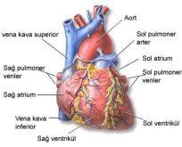 Kalp hastalarına altın öğütler