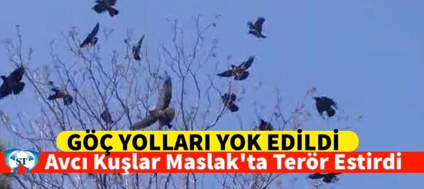 AVCI KUŞLAR MASLAKTA TERÖR ESTİRDİ