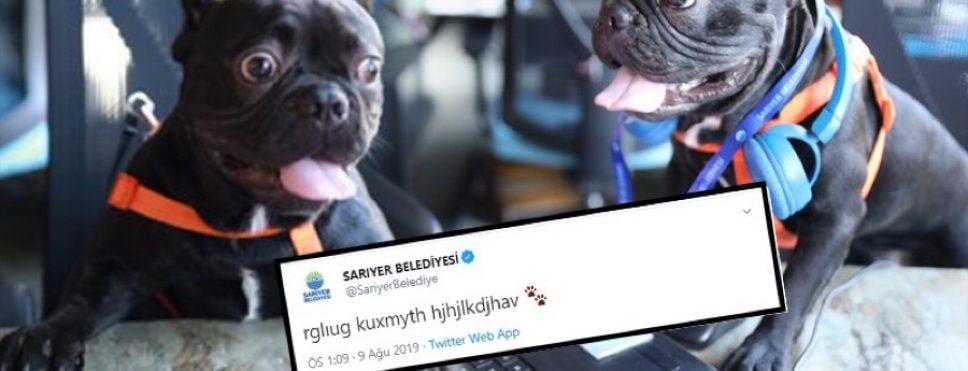"""Sarıyer Belediyesi'nden sokak hayvanları için çağrı: """"rglıug kuxmyth hjhjlkdjhav"""""""