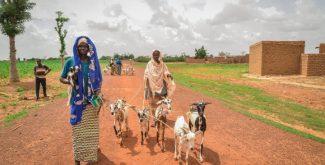 İyilik Derneği, Afrika'nın derdine süt keçileri ile koşuyor