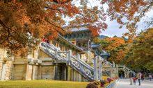 Güney Kore'de sonbahar 'eşsiz bir deneyime' dönüşüyor
